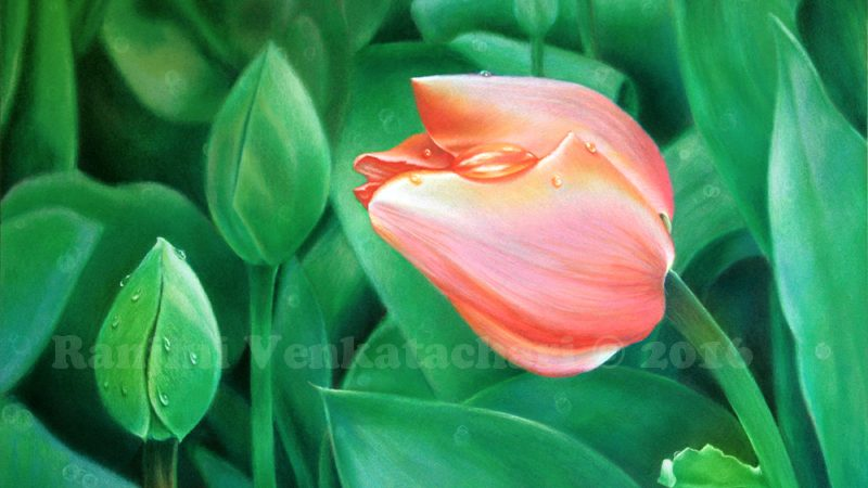 Floral colored pencil art by Ranjini Venkatachari
